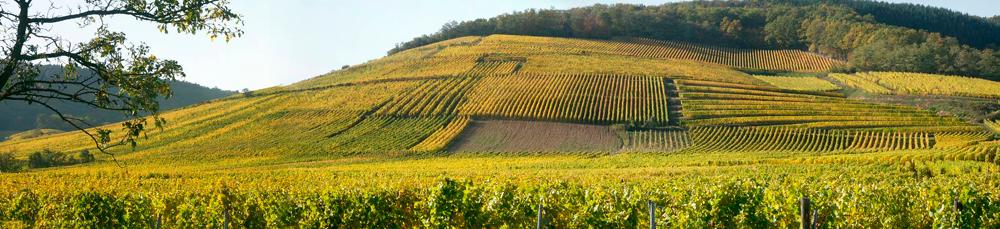 vignes-Saint-Hippolyte