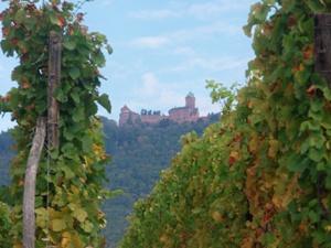 Nos vignes au pied du château du Haut-Koenigsbourg